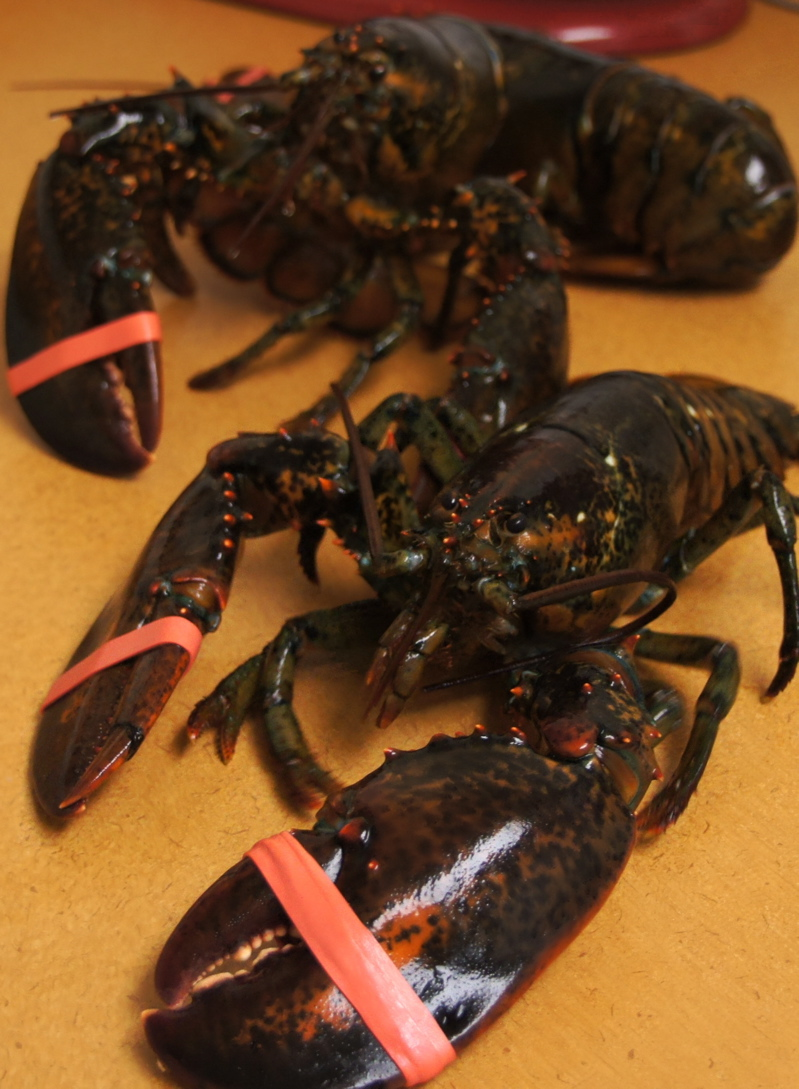 new england style lobster bake testerfoodblog some people might be squeamish about putting a live lobster into the steamer to cook and that is an individual decision from a taste perspective